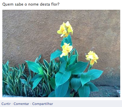 flor facebook